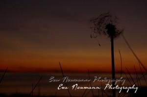 Sun Set Ewa Neumann Photography